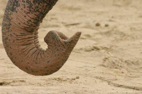 Elefant_Ruesselspitze
