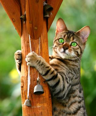 Diese Katze holt gerade ihre Glöckchen ab - Foto: © marilyn barbone - Fotolia.com