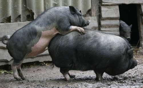 Diese Schweinerei darf nicht in Schulnähe stattfinden!