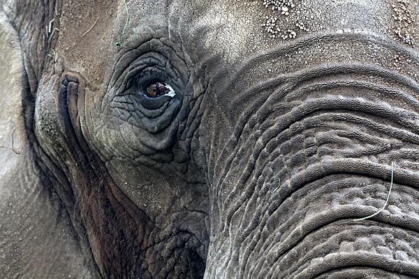 Elefant - Foto: © Martina Berg