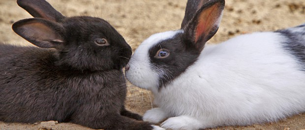 Schmusende Kaninchen