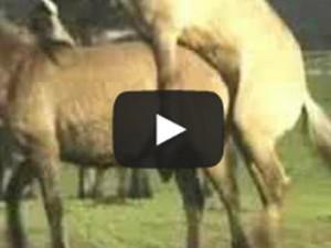 Paarungsverhalten Und Geburt Bei Den Dülmener Pferden Kuriose Tierwelt