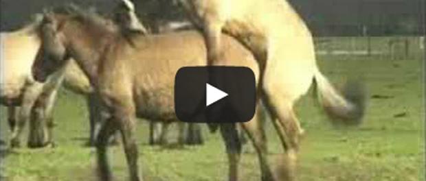 Frauen sex mit pferden