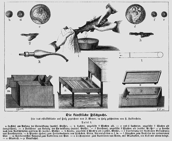 Aus dem Hottinger Volksblatt von 1878