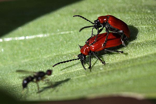 Eine Mücke als Zuschauer - Foto: © Martina Berg