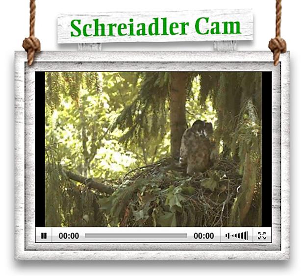 schreiadler-cam