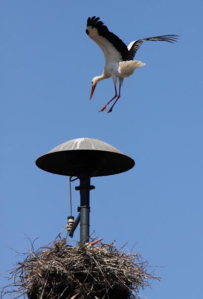 Gekonnte Landung - Foto: © Martina Berg