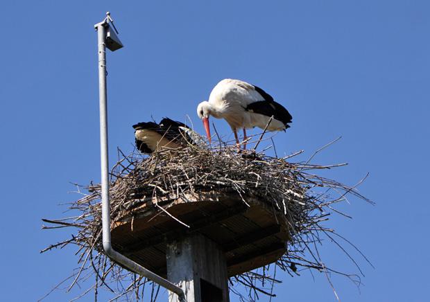 Nest mit Kamera - Foto: © Martina Berg