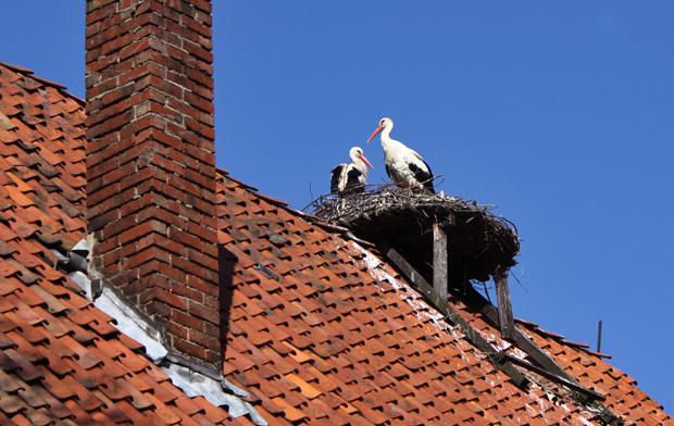 Storchenpaar - Foto: © Martina Berg