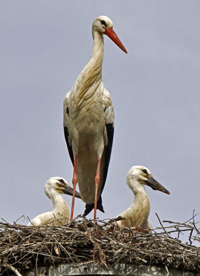 Alle Vögel die Augen links - Foto: © Martina Berg