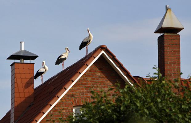 Drei Störche auf einem Dach in Elbrinxen - Foto: © Martina Berg