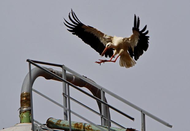 Landung auf einem Silo - Foto: © Martina Berg