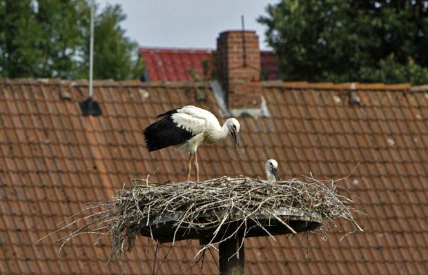 Storchennest vor einem Dach - Foto: © Martina Berg