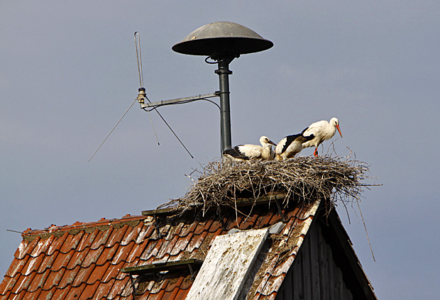 Storchenenst auf dem Spritzenhaus - Foto: © Martina Berg