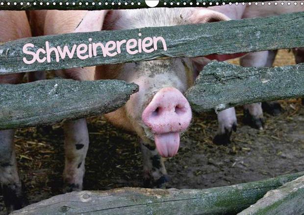 Schweinereien - Wand- und Tisch-Kalender 2015