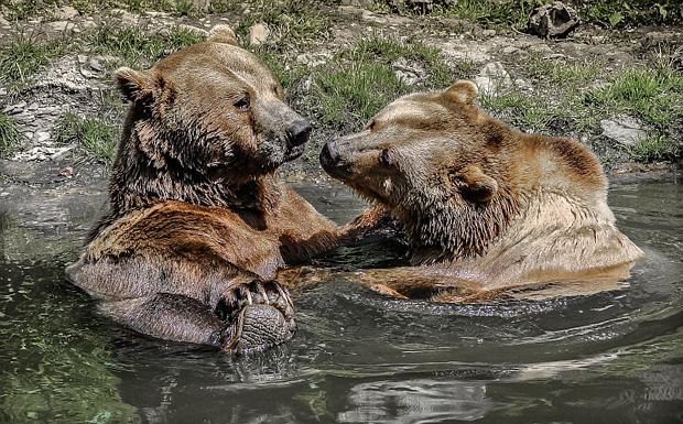 Bärenliebe - Foto: © Nicola Gehrs