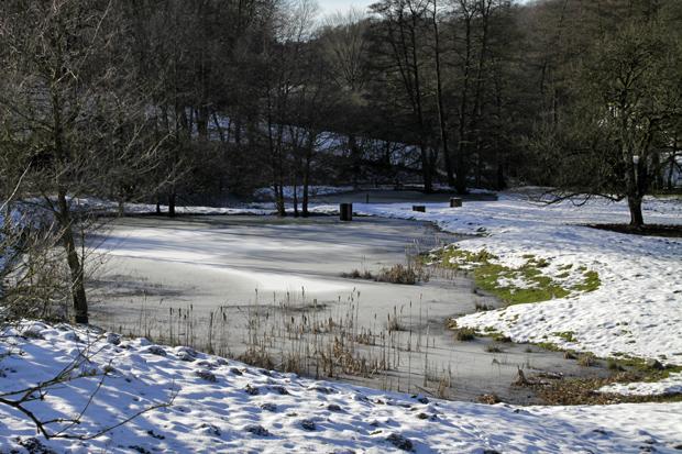 Teich im Siekbachtal - Foto: © Martina Berg