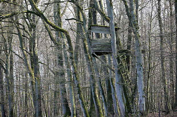 Hochsitz im Wald - Foto: © Martina Berg