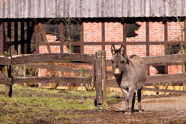Esel - Foto: © Martina Berg