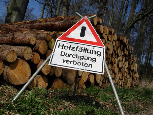 Sperrung wegen Holzfällung - Foto: © Martina Berg