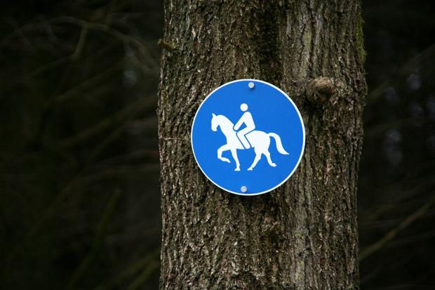 Reitweg im Wald - Foto: © Martina Berg