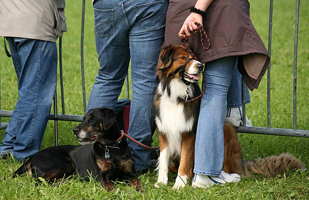 Hunde mit Frauchen an der Leine - Foto: © Martina Berg