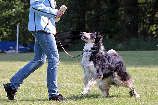 Hundetraining - Foto: © Martina Berg