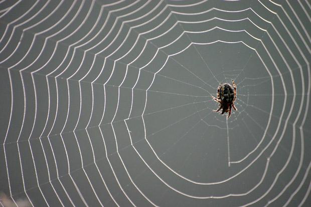 Spinnennetz mit Spinne - Foto: © Martina Berg
