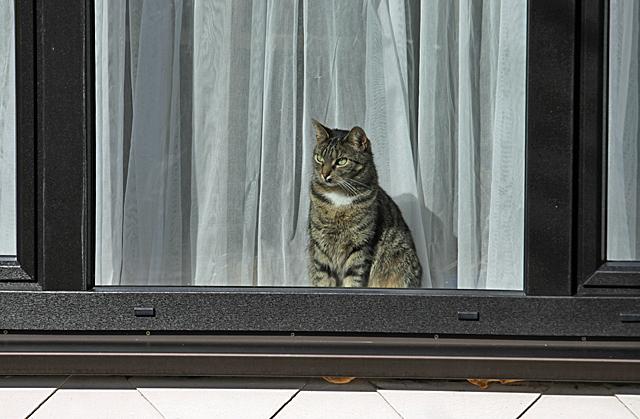Katze guckt aus einem Fenster - Foto: © Martina Berg