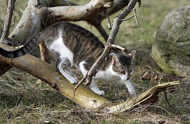 Katze auf Entdeckungstour - Foto: © Martina Berg